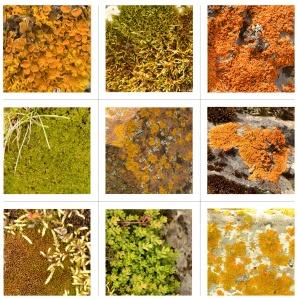alfombras vegetales